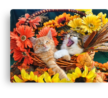 Venus & Di Milo ~ Cute Kitty Cat Kittens in Fall Colors Canvas Print