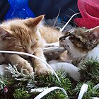 Venus &amp; Di Milo ~ Contemplation ~ Cute Winter Kitty Cat Kittens by Chantal PhotoPix