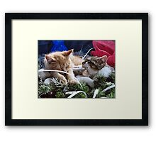 Venus & Di Milo ~ Contemplation ~ Cute Winter Kitty Cat Kittens Framed Print