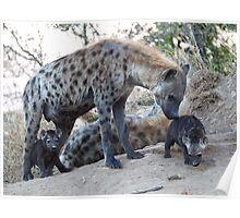Hyena Family Poster