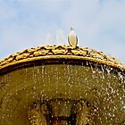 Bird on Fountain - The Vatican, Italy by Lori  Heiss