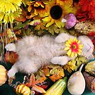 Di Milo ~ Fall Harvest ~ Cute Kitty Cat Kitten in Fall Colors by Chantal PhotoPix