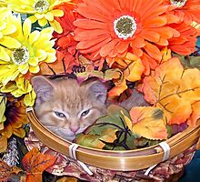Di Milo ~ Hidden ~ Fall Kitten by Chantal PhotoPix