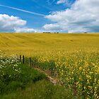 A field of oil by Rob Hawkins