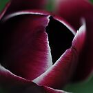 Portrait of a Tulip by Rosy Kueng
