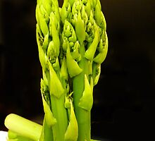 Green asparagus on dark background by bubblehex08