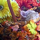 Di Milo ~ Chin-up ~ Fall Kitty Cat Kitten in a Basket of Fall Flowers by Chantal PhotoPix