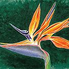 Bird of Paradise Flower by jsalozzo