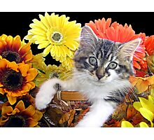 Venus ~ Cute Kitty Cat Kitten in Decorative Fall Colors Photographic Print