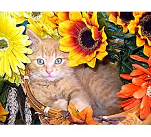 Di Milo ~ Sunflower Basket ~ Cute Kitty Cat Kitten Photographic Print