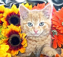 Di Milo ~ Gaze ~ Fall Kitty Cat Kitten in Gerbera Flowers by Chantal PhotoPix