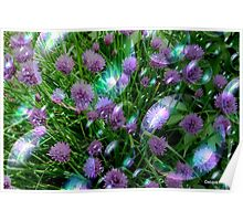 Bubbly Chives Poster