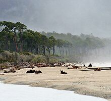 bruce bay  south westland  nz by rina  thompson