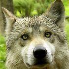 Soy un Lobo Mexicano by soyrwoo