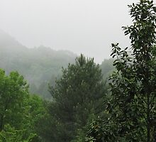Trees In My Garden - Smoky Mountains by JeffeeArt4u