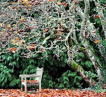 Sit & Watch the Seasons Change - Mt Wilson NSW by Bev Woodman