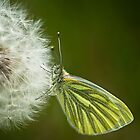 Green vained white by KWTImages