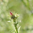 Thorny Flowerbeds by Sarrah  B
