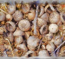 Acorns Waiting for Life by Kenneth Hoffman