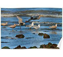 SHORELINE BIRDS Poster