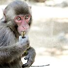 : Monkeyyy! : by Only K Photography