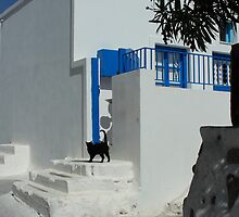 black cat at front of a white house in santorini by milena boeva