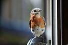 Bluebird at Door by Eileen McVey