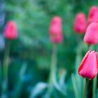 The Beautiful Spring Flowers by Dmitry Shytsko
