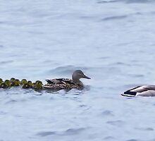 * ˛˚ ♥ 。✰˚* ˚ ★ღ.(●̮̮̃•̃)..(●̮̮̃•̃) Mom & Dad And Our Ten Little Babies Quack Quack* ˛˚ ♥ 。✰˚* ˚ ★ღ  by ╰⊰✿ℒᵒᶹᵉ Bonita✿⊱╮ Lalonde✿⊱╮