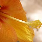 Yellow Hibiscus by Sherri Fink