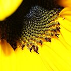 """Sunflower"" by Toni McPherson"