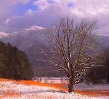 WINTER,CADES COVE by Chuck Wickham