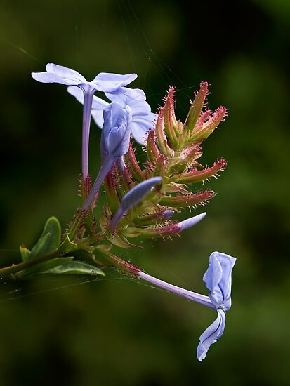 Blooming by the lake by Celeste Mookherjee