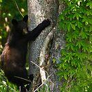 Black Bear by Joe Elliott