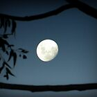 Moon in Nature's Frame by Julie Sleeman