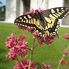 Butterfly by DJ-Stotty