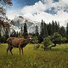 Beauty In the Valley by Leasha Hooker
