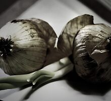 Two Onions by RosiLorz