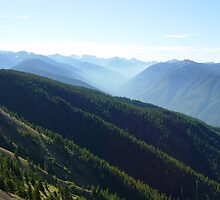 Valleys at Hurrican Ridge by mrscaer
