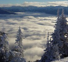 Cloudy Valley below Hurricane Ridge in Winter by mrscaer