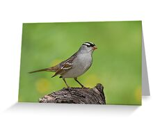 White-crowned Sparrow posing pretty. Greeting Card