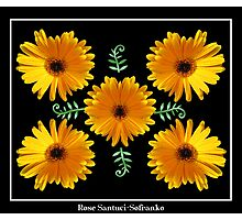 Daisy Collage Photographic Print
