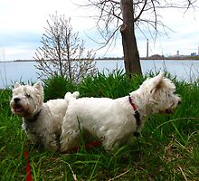 North East Westies by MarianBendeth
