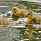 Ducks On The Pond by Monte Morton