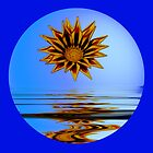 Gazania Reflection by theaussie
