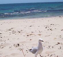 Seagull Dancing by Robert Phillips
