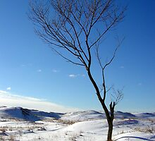 Winter Tree at North Barr Lake. by mrscaer