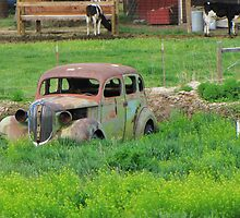 Put Out To Pasture by trueblvr