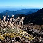Mt Rainer from Mt Townsend by mrscaer