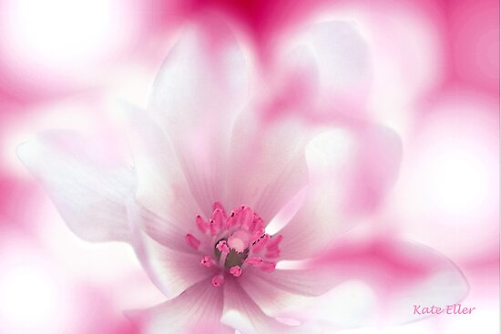 In the Pink by Kate Eller